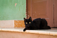 Black cat lying on a doorstep in Trinidad, Cuba.