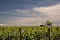 Long Island Wine Country<br /> Cutchogue, Long Island