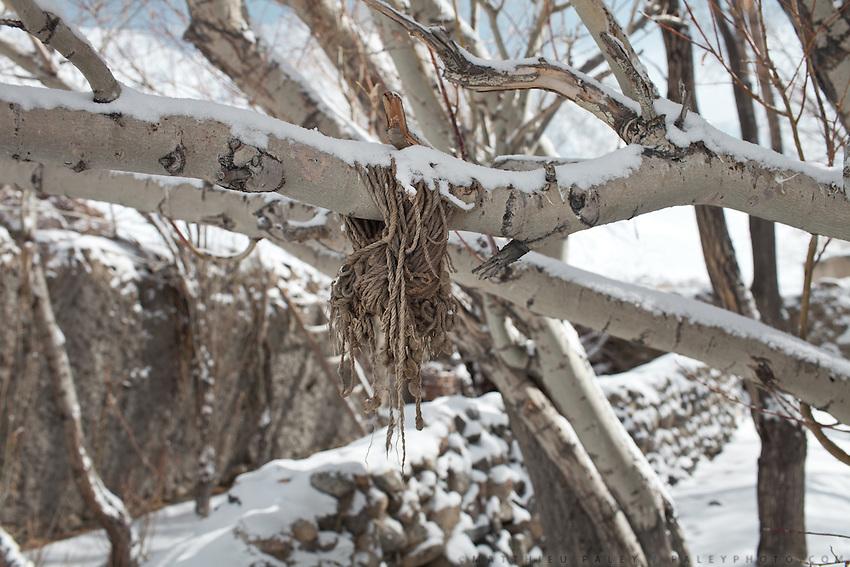 Detail of a rope tied to a tree. Sarhad village, the end of the road in the Wakhan Corridor.