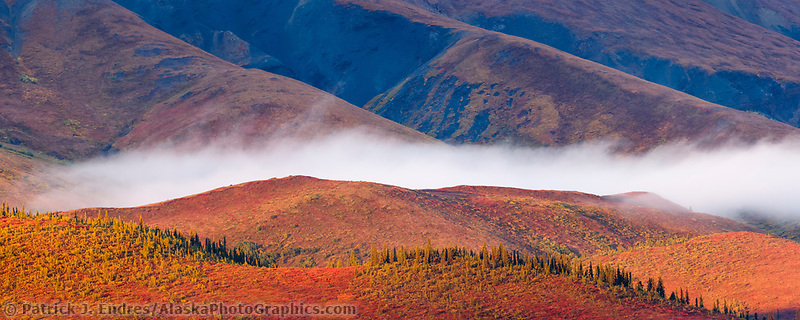 Panorama of sunrise and morning fog over the Alaska Range mountains, Denali National Park, Interior, Alaska.