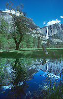 795758505 a still pond creates a perfect reflection of yosemite falls and the surrounding oaks and fir trees as seen from the valley floor in yosemite national park california