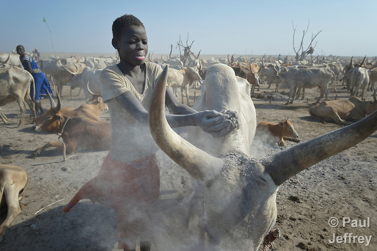 A girl throws ash on an animal on April 12, 2017, in a cattle camp in Dong Boma, a Dinka village in South Sudan's Jonglei State. Most of the families in the village recently returned home after being displaced by rebel soldiers in December, 2013, and they face serious challenges in rebuilding their village while simultaneously coping with a drought which has devastated the cattle herds that provide a foundation for their economy and culture.<br /> <br /> The ash helps control flies in the cattle herd.<br /> <br /> The Lutheran World Federation, a member of the ACT Alliance, is helping the villagers restart their lives with support for housing, livelihood, and food security.