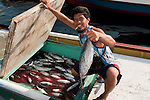 Skip jack tuna from Mabul fishermen delivering their catch to Semporna. Fish is still in the boat's holding box with blood mixed with melted ice water.