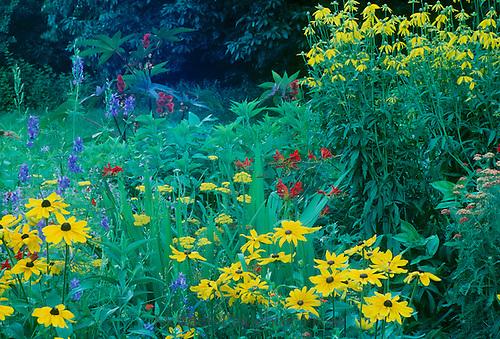 Wildflowers at edge of treeline, midwest USA