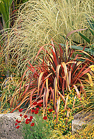 Phormium and ornamental grass, Cortaderia in entry garden at San Francisco Botanical Garden at Strybing Arboretum