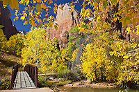 Foot bridge, Yellow Cottonwood, the patriarchs, Zion National Park