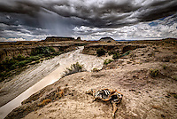 A dead cow lies near the edge of the Rio Puerco which is bringing much needed water to the desert.