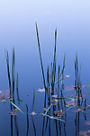 Reeds and fall leaves, Lake Powhatan, Pisgah National Forest, North Carolina