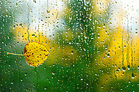 Windswept leaf on window