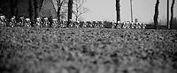 stretched peloton..74th Gent-Wevelgem (2012).236km between Deinze & Wevelgem.winner 2012: Tom Boonen..
