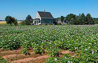 Canada Prince Edward Island, P.E.I. Charlottetown farming with famous PEI potatoes, farm with flowers and farm housae