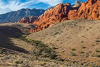Red Rock Canyon, Nevada.  Calico Hills.  Vegetation follows watercourse.