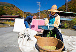 An elderly resident sorts soya beans Shouji Village near Aokigahara Jukai, better known as the Mt. Fuji suicide forest, which is located at the base of Japan's famed mountain west of Tokyo, Japan on 03 Nov. 2009. ..