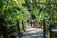 Visitors on the boardwalk at the Hawa'ii Tropical Botanical Garden, in Onomea, which is a four-mile scenic drive north from Hilo on the Big Island of Hawaiʻi.