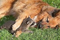Laska mit Wildtieren