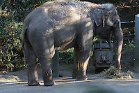 Elephants at the Woodland park Zoo in december 2014