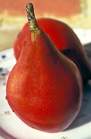 Pyrus 'Red Bartlett' (Red Bartlet Pear)