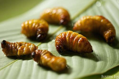 Coconut worms is served at the Dai Meng Mou Restaurant in Ruili, Yunnan province, southwestern China.