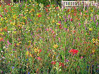 Wildflower meadow field with garden bench naturalistic