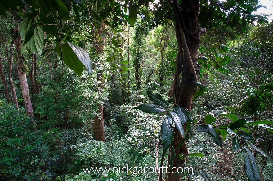Lowland rain forest | Nick Garbutt