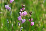 spring bloom in meadow