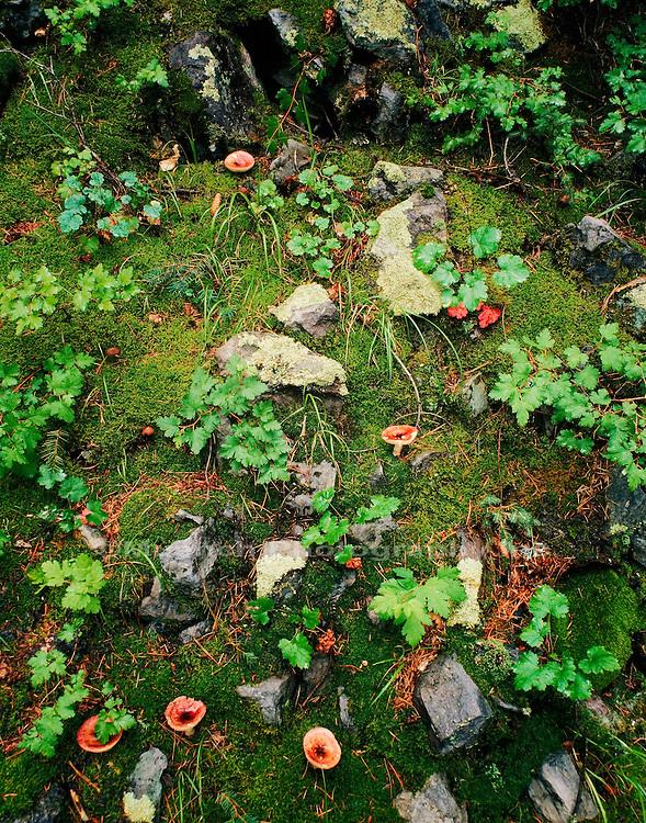 Forest floor, Chiricahua Wilderness