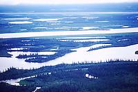 Mackenzie River Delta near Inuvik, NWT, Northwest Territories, Arctic Canada - Black Spruce Trees, Aerial View
