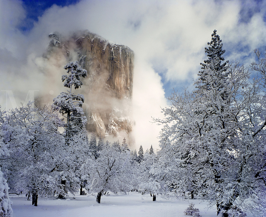 El Capitan in winter, surrounded by blowing snow and trees. Yosemite National Park, California.