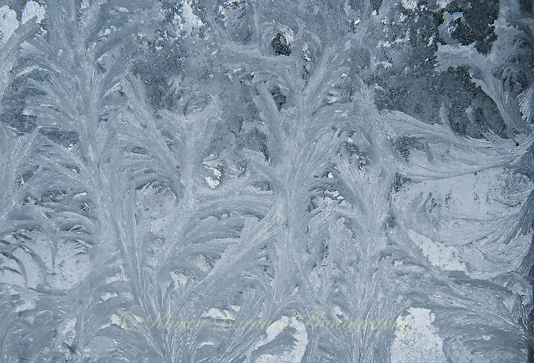 &quot;WINDOW CRYSTALS-10&quot;<br /> <br /> Ice crystals formed on a pane of window glass. The ice crystal formations looking like the leaves of a fern.