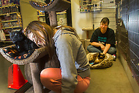Volunteers from Purrfect Pals Lily Giroux, 14 (left) and her mother Dori Giroux, both from Bothell, Wash., take care of Edwin (left), 7 years, and Joey Jobie, age 7 years in the adoption center at Petsmart in Woodinville, Wash. on March 28, 2015. Petsmart donates food and litter in the adoption center. Volunteers from Purrfexct Pals keep it clean and monitor it during store hours. All the adoption fees paid by new owners go back to the nonprofit rescue, tax free.   According to their website cats and kittens from Purrfect pals are available for adoption in four Petco stores, seven Petsmart stores and Denny's Pet World.  Purrfect Pals is a non-profit cat shelter and sanctuary based out of Arlington, Washington who specialized in special needs pets. (photo © Karen Ducey Photography)