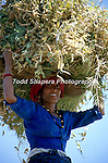 A woman carrying fodder on her head for her buffalo in Tehri Garwhal, India.