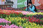 Foto: VidiPhoto<br /> <br /> AMSTERDAM - Duizenden toeristen, dagjesmensen en Amsterdammers hadden er zaterdag urenlang wachten voor over om een gratis bosje tulpen te bemachtigen. Op de Dam in Amsterdam werd zaterdag voor het vierde jaar op rij de Nationale Tulpendag gehouden. De unieke pluktuin met ruim 200.000 tulpen werd vanaf 13.00 uur opengesteld voor het publiek, terwijl kwekers en vrijwilligers al vanaf 7.00 uur bezig waren om de tulpen op de juiste plek te zetten. Dit jaar was er bijzondere aandacht in de tulpenmoza&iuml;ek voor het Nederlandse Rode Kruis. De tulp is tot eind april de populairste voorjaarsbloem van ons land. Via de Nederlandse bloemenveilingen worden naar verwachting dit jaar zo'n 2 miljard tulpen verhandeld. Toeristen maakten zaterdag van de gelegenheid gebruik om niet alleen een bosje tulpen mee naar huis te nemen, maar ook om uitgebreid foto's te maken in de enorme pluktuin.