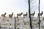 506 Elk Of Kentucky