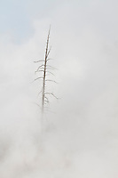 Dead tree and steam in the Mud Volcano Thermal Area