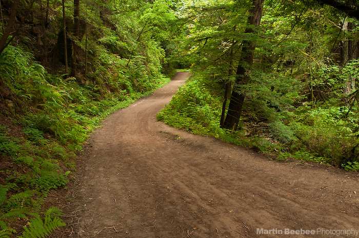 Purisima Creek Trail winds through a redwood forest, Purisima Creek Redwoods Open Preserve, California