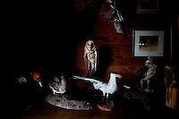 LITTLE ST. SIMONS ISLAND, FL -- October 1, 2010 -- Taxidermy animals sit in the museum in the Hunting Lodge on Little St. Simons Island on Friday, October 1, 2010.   The 10,000 acres of marshland, beaches, and forests are a refuge for wildlife and vacationers alike with only 32 guests permitted a night.  (Chip Litherland for Bay Magazine)