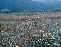 749450302 frozen ice-covered grasses on a quiet foggy winter morning in grand tetons national park in wyoming