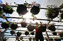 2014_05_18_hanging_baskets