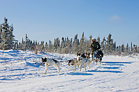 Recreational dog mushing in the White Mountains National Recreation Area.