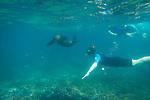 Snorkeling with sea lions at Champion Islet near Floreana Island, Galapagos National Park, Galapagos, Ecuador