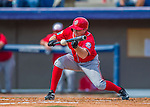 29 February 2016: Washington Nationals outfielder Tony Campana lays down a bunt during an inter-squad pre-season Spring Training game at Space Coast Stadium in Viera, Florida. Mandatory Credit: Ed Wolfstein Photo *** RAW (NEF) Image File Available ***