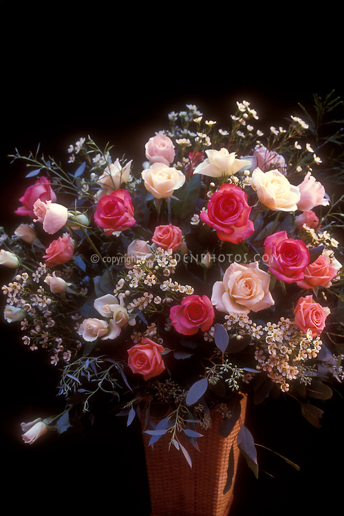 Roses, bouquet of many colors, in wicker basket vase with black background with warm side light