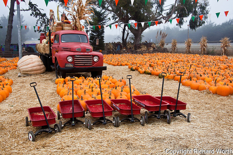Little red wagons, all in a row, wait for customers to come and put them to work.  In the background, a giant pumpkin sits next to the Pumpkin Depot's old red truck