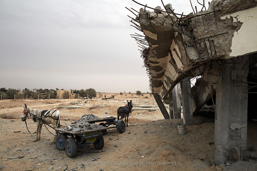 Donkeys stand with carts loaded with rubble at Yasser Arafat International Airport in southern Gaza. The rubble fetches 50 Shekels (approx EUR10) per tonne and is used for the production of concrete.