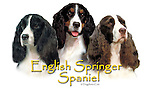English Springer Spaniel trio This design is offered on gift merchandise ONLY.<br />
