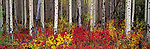 A colorful autumn landscape, Grand Teton National Park, Wyoming, USA.<br />