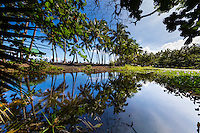 Reflection of palm trees in the wetland at Punalu'u Beach Park, Hawai'i Island. People line the park's black sand beach in the distance, looking towards the vast ocean.