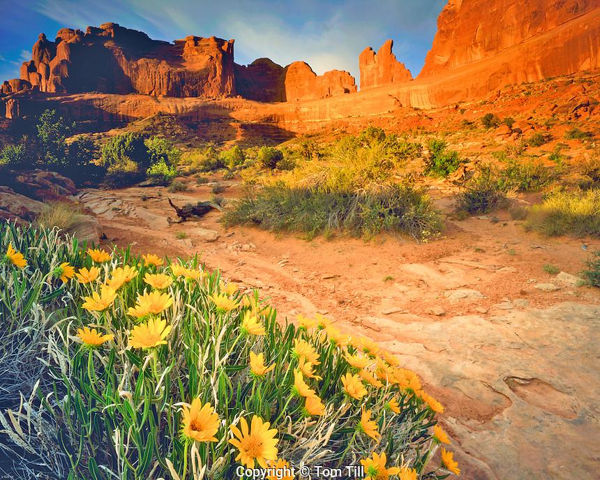 Spring Mule Ear Flowers & Park Avenue, Arches National Park, near Moab, Utah