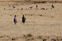 Herdswomen with their flock on the Puna at approx 4000m in the Andes mountains