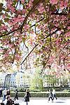 Notre Dame Park, Ile de la Cite, Paris, France, Europe